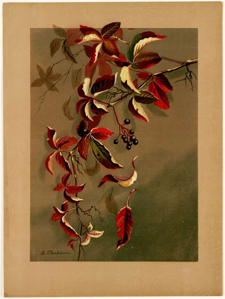 Autumn Leaves with Black Berries