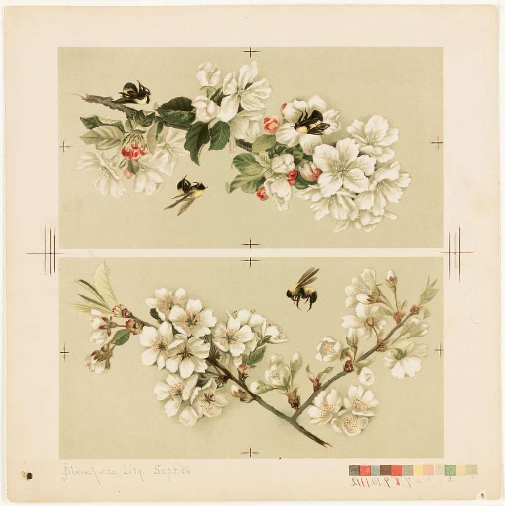 Cherry Blossom and Bees / Apple Blossoms and Bees
