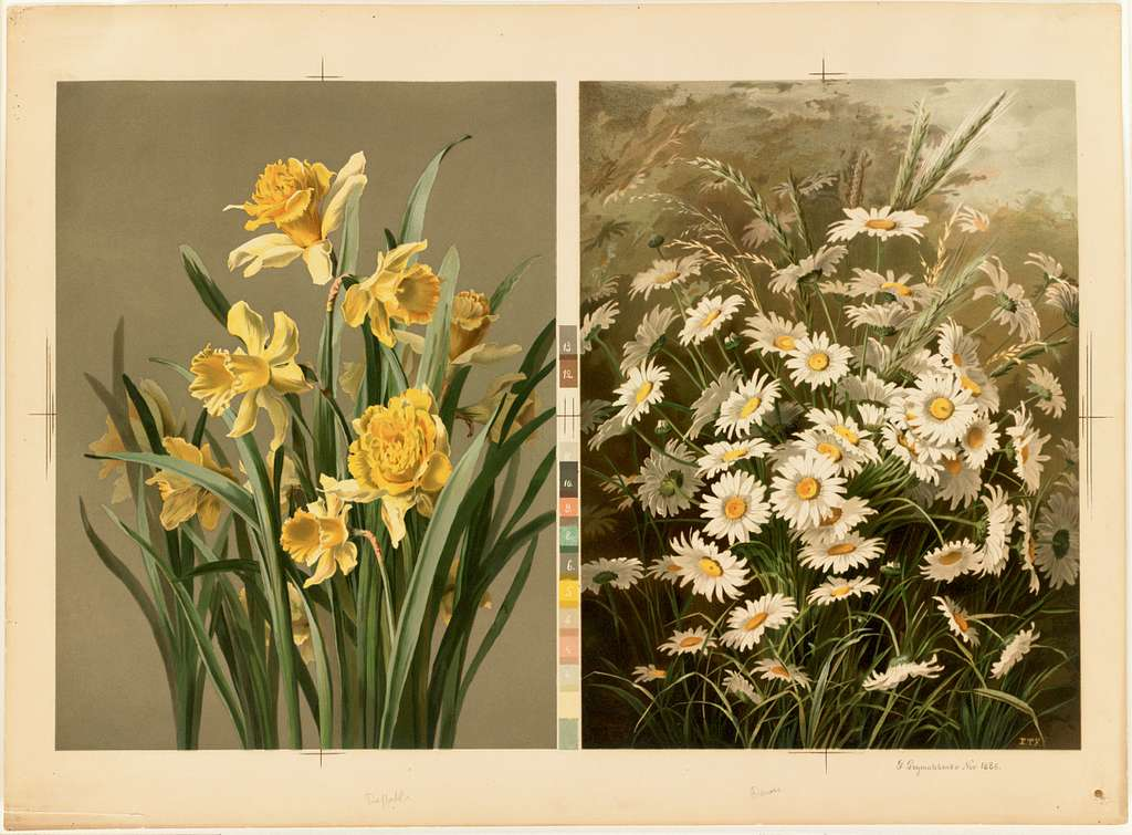 Daffodils and Daisies