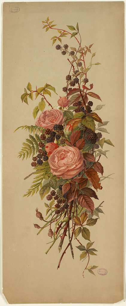 Roses and Blackberries