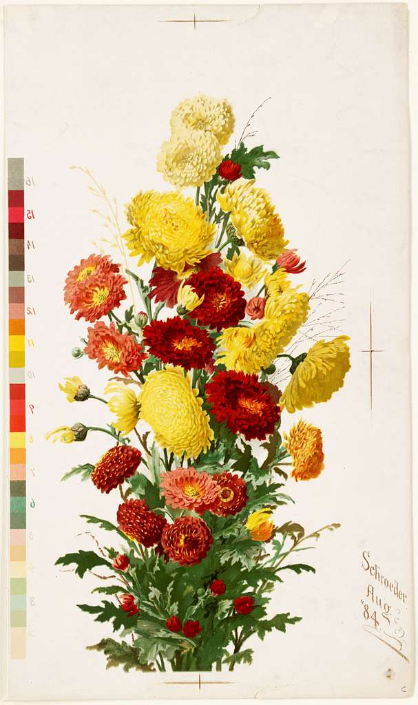 Yellow and Red Chrysanthemums