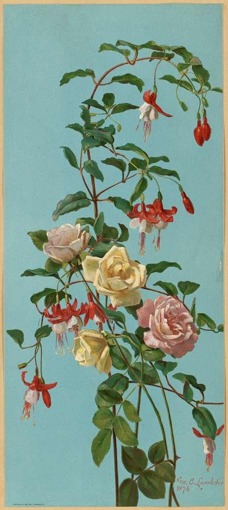 Roses and Fuchsia