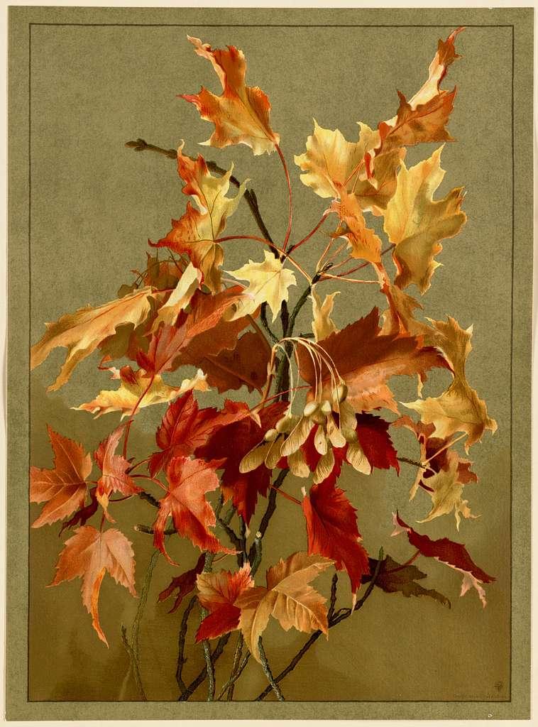 Autumn Leaves, No. 2 (Maple)