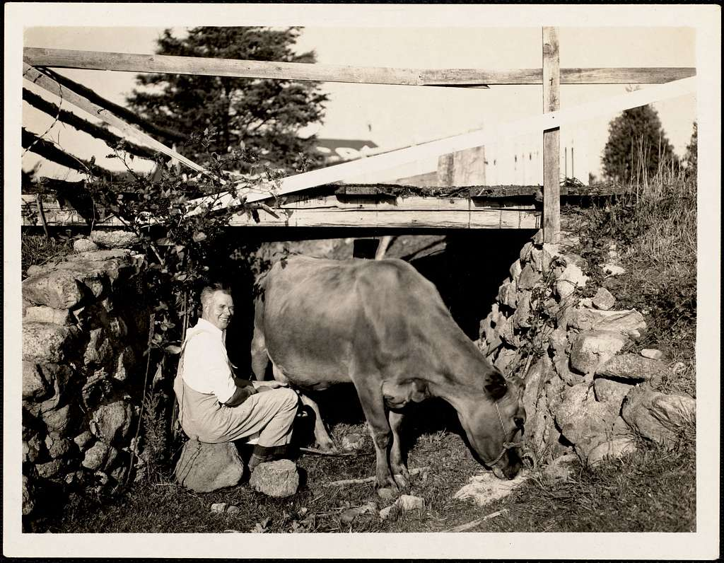 Hilding Hord (1885-1964) milking a Jersey cow under the Lawrence Bridge, an ancient cow passage under Race Lane